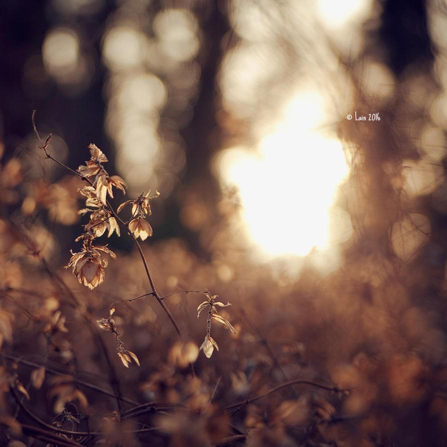 Wintersonne by Lain-AwakeAtNight