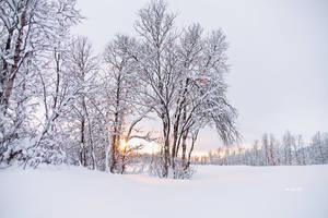 Winter Sunset by Lain-AwakeAtNight