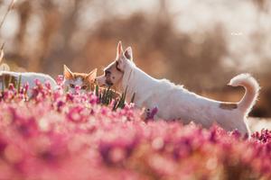 Kitty and Edward