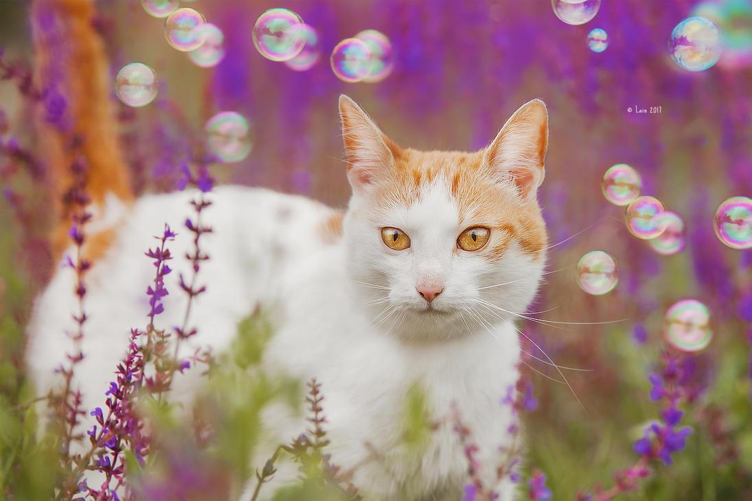 Kitty by Lain-AwakeAtNight