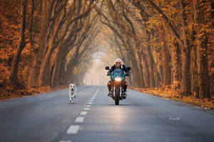 A girl, her bike and her dog