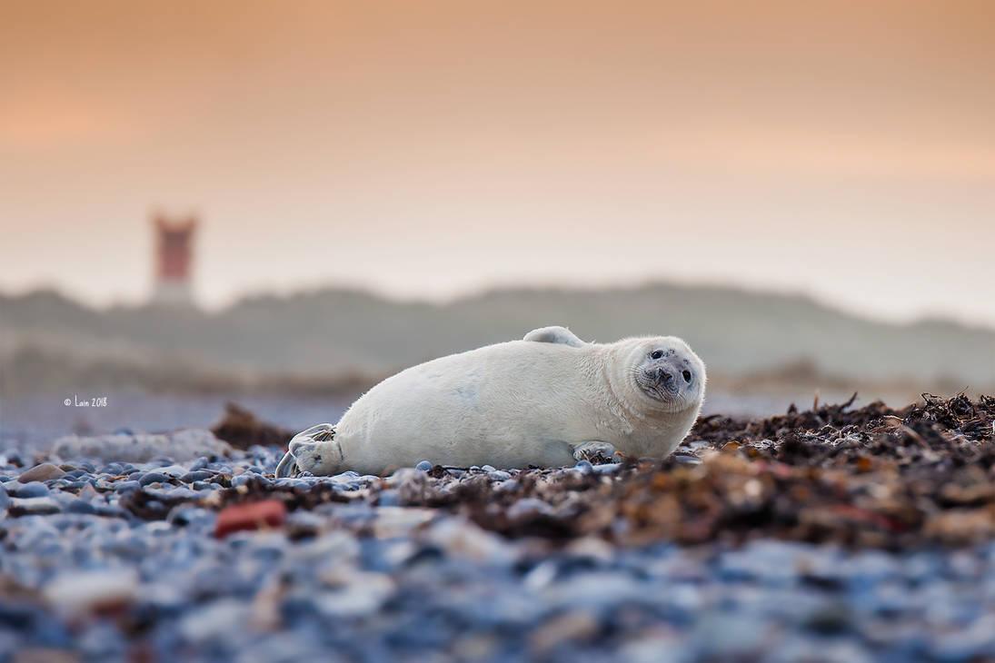 Baby Seal by Lain-AwakeAtNight