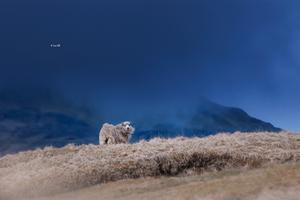 wenn der wind weht by Lain-AwakeAtNight