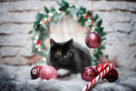 Maxi waiting for Santa