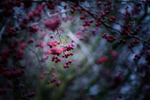 winter ohne schnee by Lain-AwakeAtNight