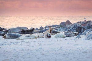 Sunrise Seals by Lain-AwakeAtNight