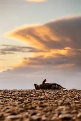 Sunrise Seal by Lain-AwakeAtNight