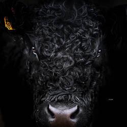 Schwarze Kuh by Lain-AwakeAtNight