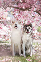 Kimiko und Saya by Lain-AwakeAtNight