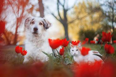 Daphne and Kitty by Lain-AwakeAtNight
