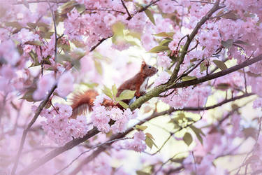 Cherry Squirrel by Lain-AwakeAtNight