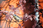 Spring Birb