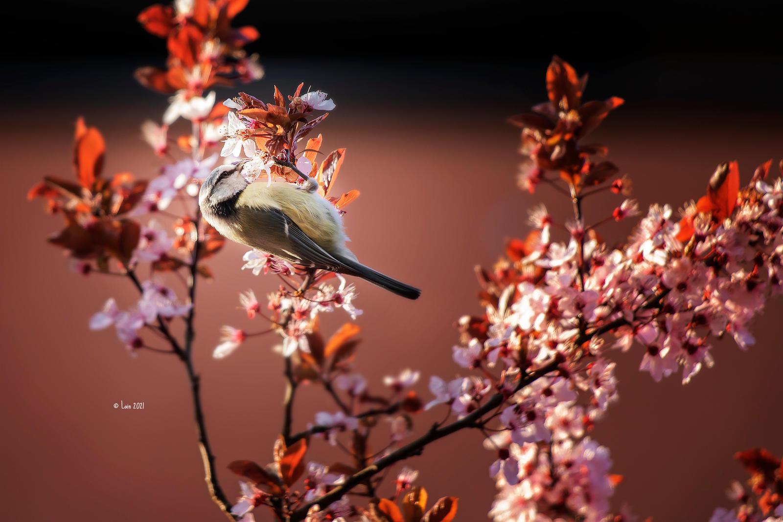 Spring Birbies
