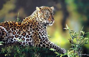 Leopard by felipemassafera