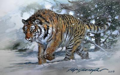 Tiger by felipemassafera