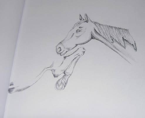 Horse in pencile