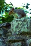 Squirrel by AshBob87