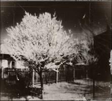Spring dream II by covanea