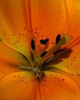 Flower Macro 6 by KalkmanPhotography