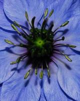 Flower Macro 3 by KalkmanPhotography