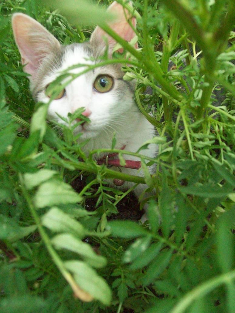 Peek -A- Boo by Caro-Kitty