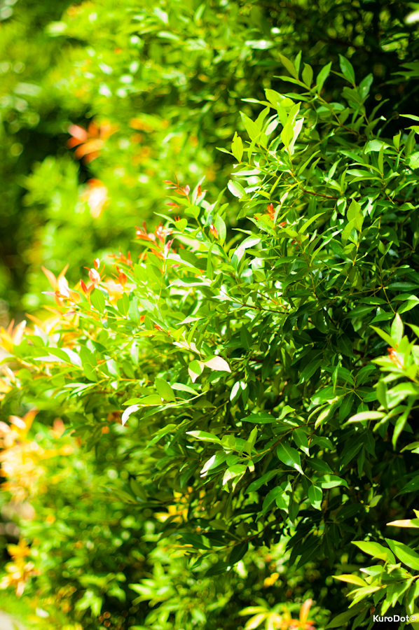 Green Wall by KuroDot
