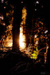 Forrest sun by ploftdk
