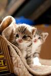 Cats and kittens no. 4