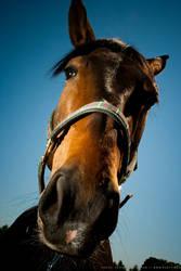 Horse by ploftdk