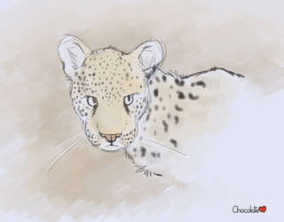 Cheetah Doodle by chocosune