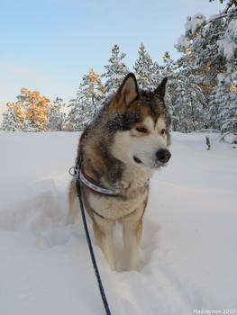 Winter Days III
