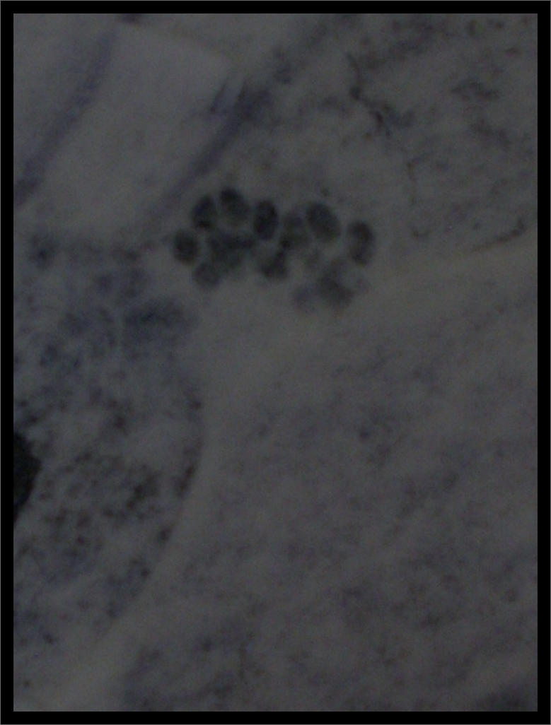 Cat paw prints in the snow by BLACK-SAYURI