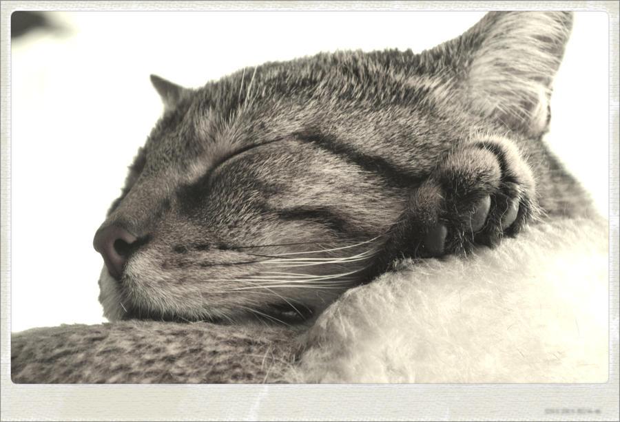 catnap by BLACK-SAYURI