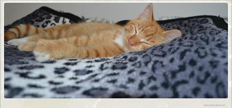 sleeping murphy by BLACK-SAYURI