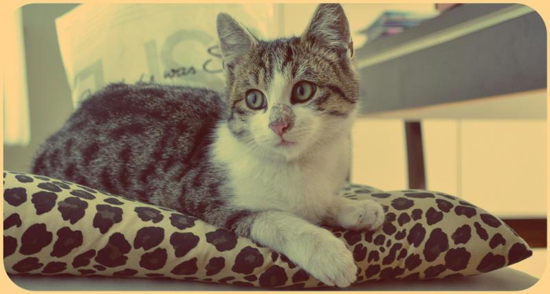 wild kitten 2 by BLACK-SAYURI