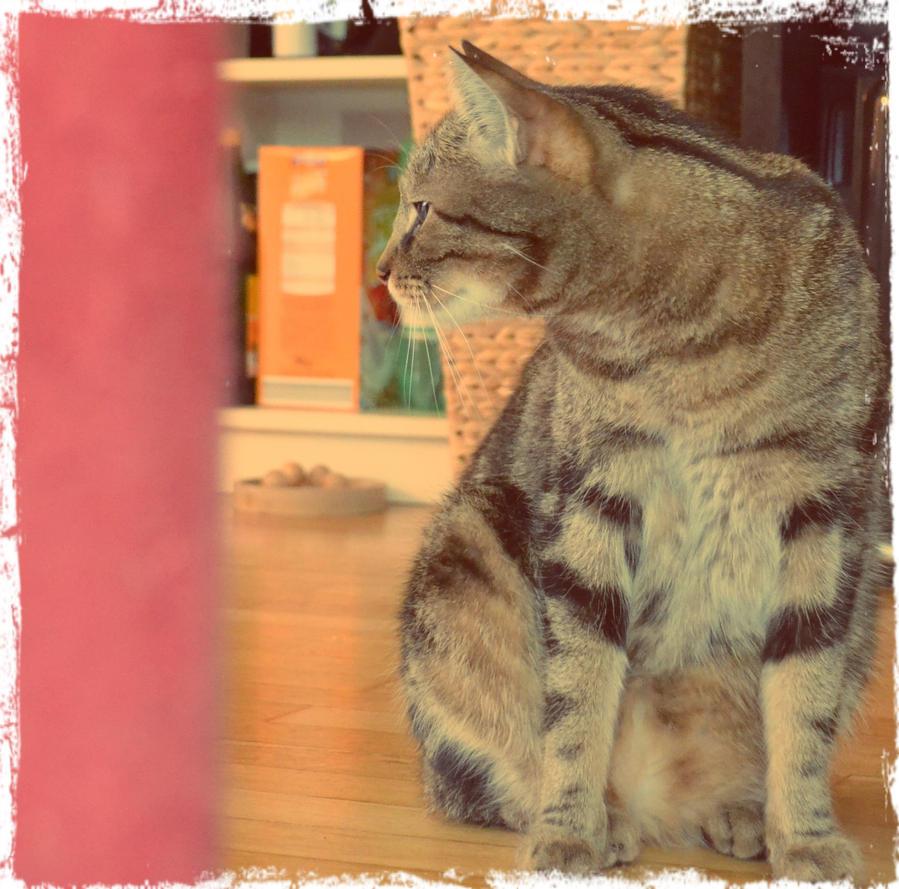 my cat quincy by BLACK-SAYURI