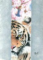 Japanese Tiger by qrafalpa