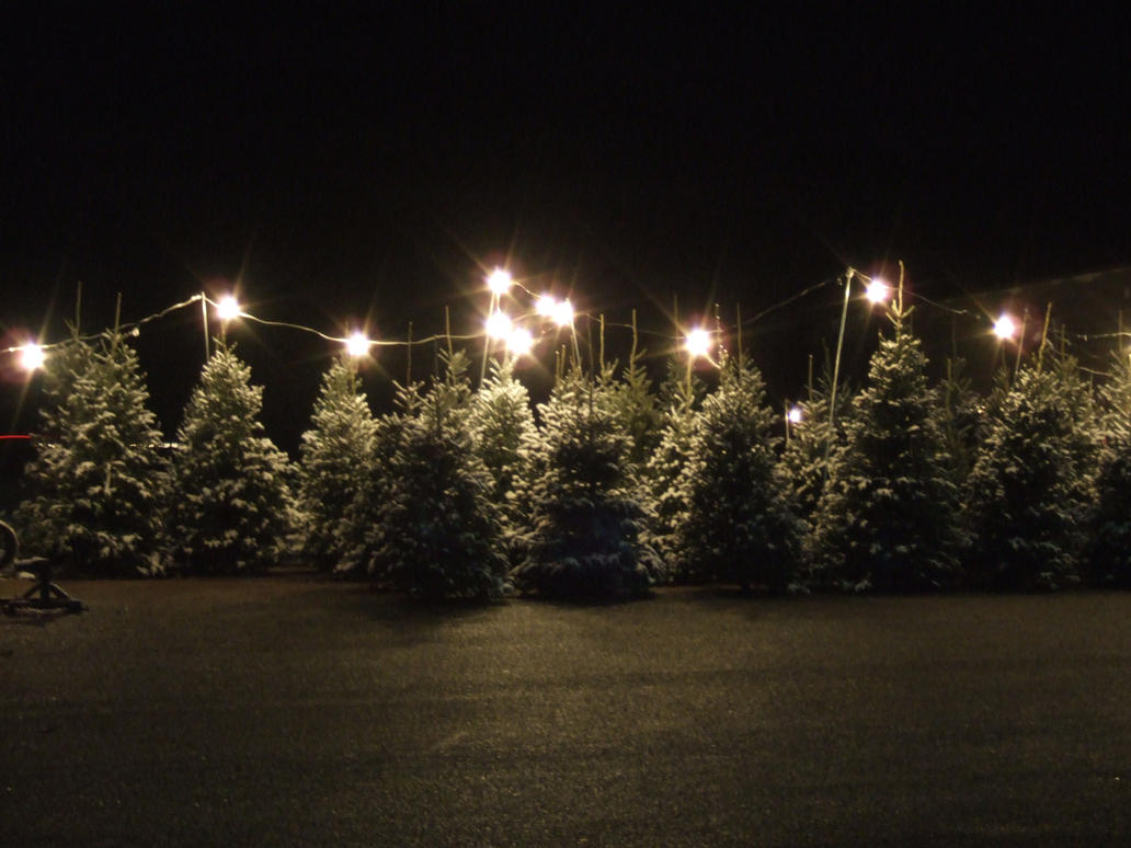 Christmas Tree Lot 3 by parkins73 on DeviantArt DOfne8SG