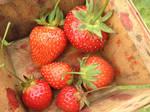 Strawberry Surprise by nosugarjustanger