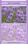 Soft Lavender Psd Coloring