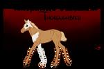 TTB Foal Design #089