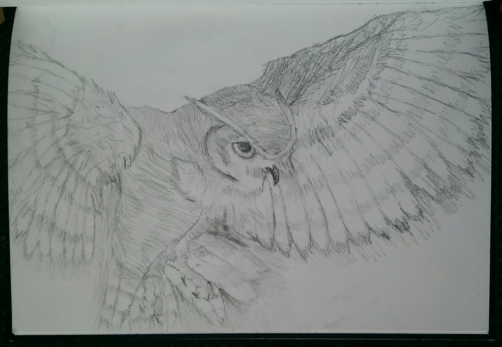i guess i do like drawing owls by sabs546 on deviantart
