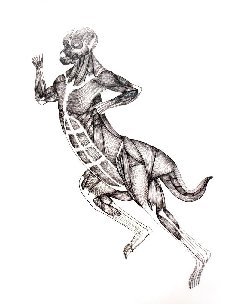 Kangaroo Morph - Muscle by Nimbus2005 on deviantART