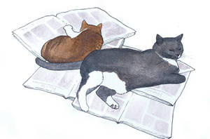 My cats 2