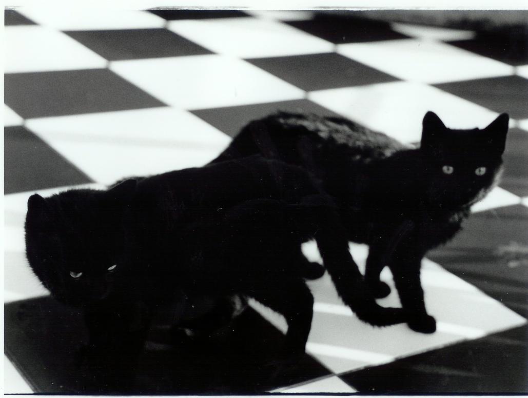 http://th01.deviantart.net/fs6/PRE/i/2005/083/4/b/The_Cats_by_keepwalkingg.jpg