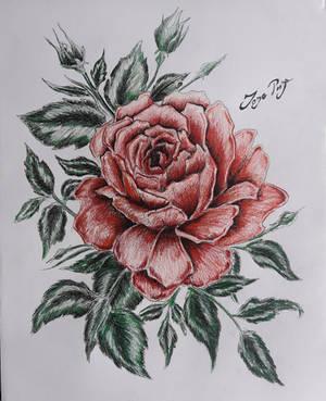 Trnova Ruza by JozeRiva