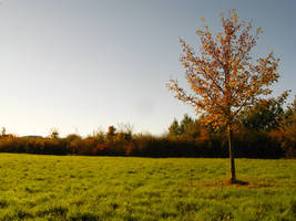 Tree Collection: Autumn 1 by Germanstock