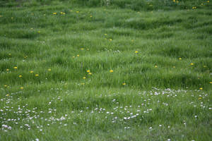 Meadow Collection: +Flowers 4 by Germanstock