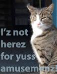 LOL Catz Undignified