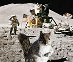 Squirrel Crashes Moonlanding